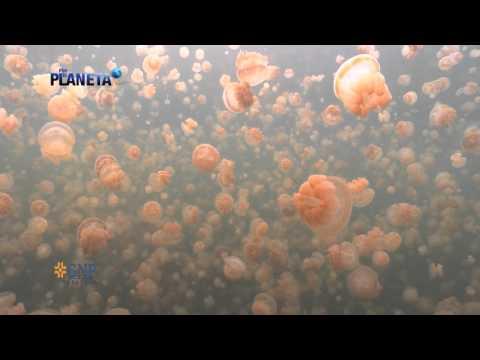 Por el planeta | Palau, el último paraíso | Parte 1
