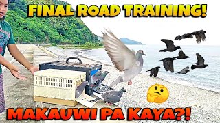 LAST AND FINAL TRAINING NG MGA KALAPATI | MAKAUWI PA KAYA SA HOMING PIGEON LOFT?