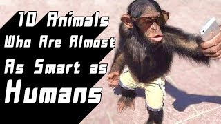 10 Animals Who Are Almost as Smart as Humans
