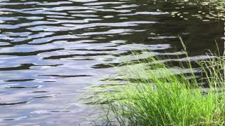 Лето в Зеленограде /часть 1/ - ИЮНЬ