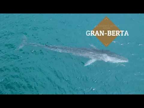 Fin Whale in the Caribbean coast of Honduras