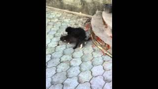 пес трахает кота оба самцы)))))))) смотреть всем!