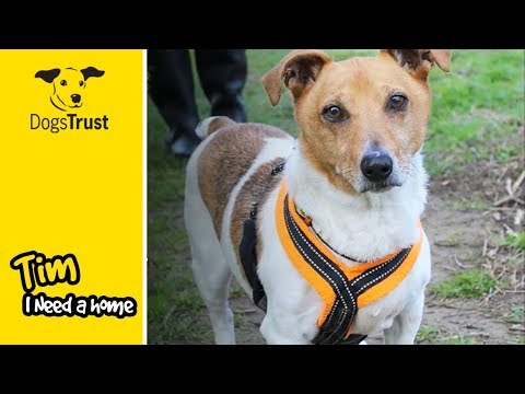 Tim is a Playful 14 Year Old Jack Russell Terrier Looking for a Quiet Home! | Dogs Trust Leeds