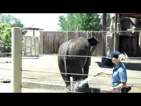 Hogle Zoo Move It