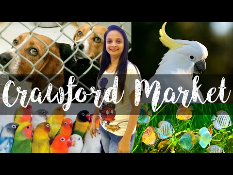 CRAWFORD MARKET THE ANIMAL BAZAAR / Mumbai Meri Jaan