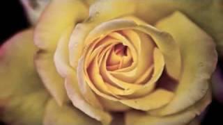 Vivaldi - Le Quattro Stagioni - La Primavera