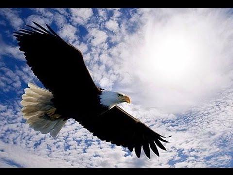 орел в орле фото