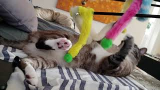 Cat Toy Wand Fluffy Balls Pom Poms Playing Demonstration
