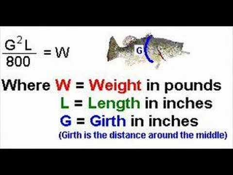 Formula For Predicting Fish Weight