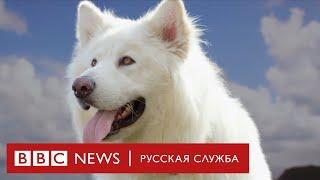 Тайная жизнь собак | Документальный фильм Би-би-си