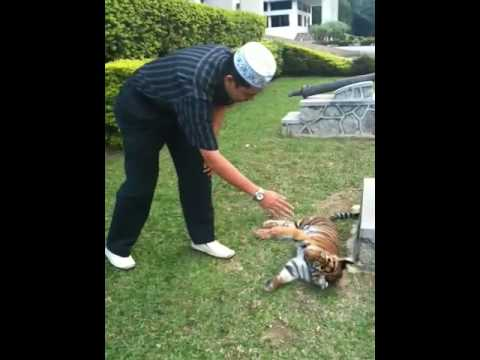 Anak Harimau Sultan Johor