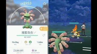 【Pokemon GO:精靈寶可夢GO】進化出搖籃百合與PVP對戰!