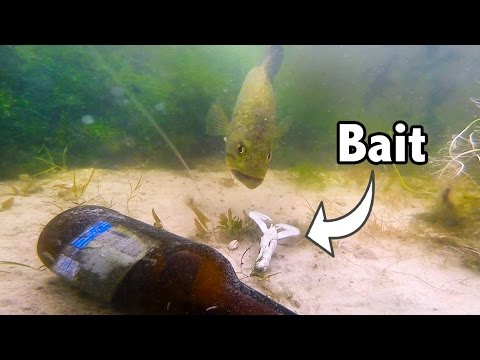 Big bass eating baits on gopro amazing underwater bed for Bed fishing for bass