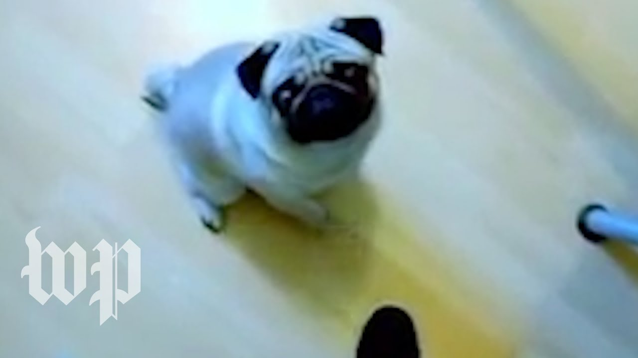 Man who taught dog Nazi salute found guilty of hate crime
