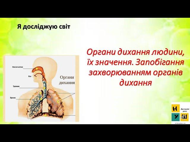 3 клас. Я досліджую світ. Органи дихання людини, їх значення. Запобігання  захворюванням органів дихання.