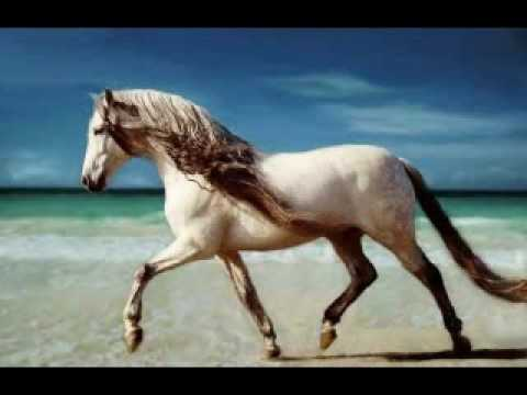 andalusian horses youtube