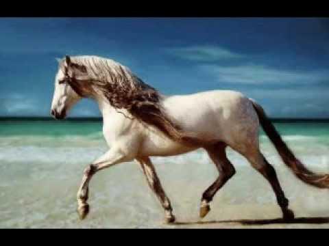 Horse Riding Wallpaper Hd Andalusian Horses Youtube