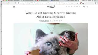 Berlin Anarchist Meditation / Green Cat Dream / NZ protests by Alexa Wilson