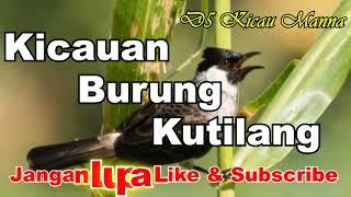 Download lagu Masteran Burung Kutilang Serasa MURAI BATU Isian MELIMPAH MP3