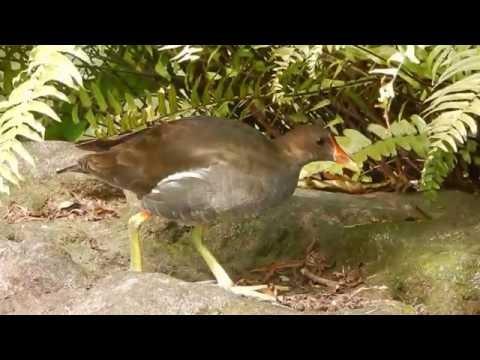 A bird @ 228 Peace Memorial Park, Taiwan