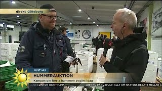 Helt otroligt dyr hummer - Nyhetsmorgon (TV4)