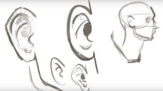 Helpful Tips for Drawing the Ear