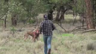 澳洲男子帶狗打獵.