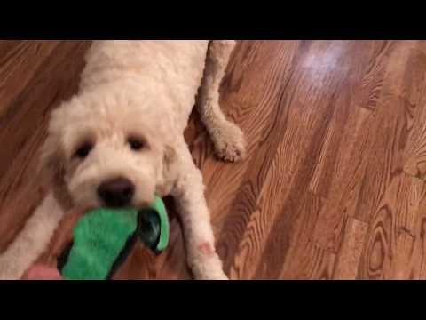 Epic Battle Dog VS Human On Slippery Floor