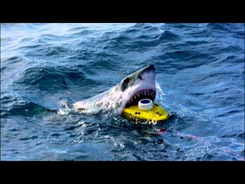 скачать игру про акул через торрент