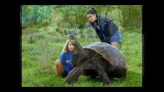 Гигантские черепахи Галапагосских о-вов