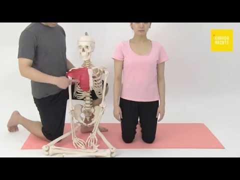 32大胸筋のストレッチ指導法