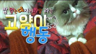 [까까캔디] 고양이행동|고양이사료|고양이소리|고양이치아| 고양이가좋아하는| 고양이 애교| 고양이가 좋아하는 소리| 고양이 관심