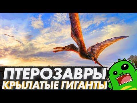 ПТЕРОЗАВРЫ — первые летающие ящеры планеты: кетцалькоатль, птеранодон, птеродактиль и рамфоринх