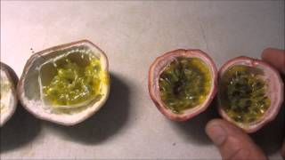 Two passionfruit varieties.  How to grow and harvest.