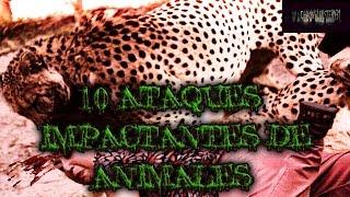 10 Ataques Más Impactantes de Animales