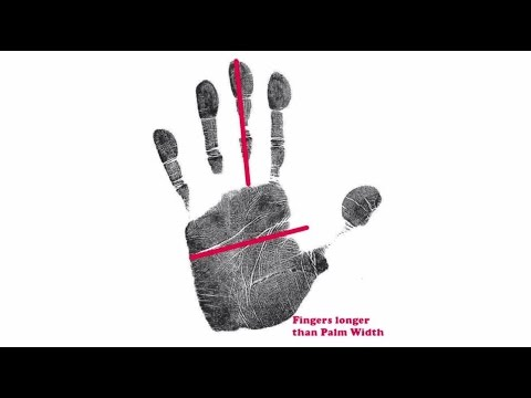 The length of your fingers indicates how quickly you tend to react - by palm-reading.org