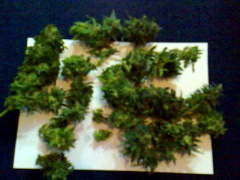 Red Dwarf  Buddha Seedbank  Day 78 Harvest Aerogarden Cannabis Grow    YouTubeRed Dwarf  Buddha Seedbank  Day 78 Harvest Aerogarden Cannabis  . Aerogarden Cannabis Harvest. Home Design Ideas