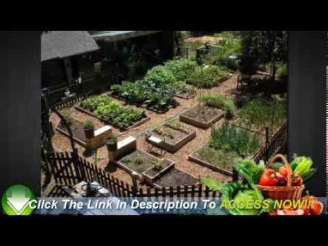 Vegetable Gardening For Beginners 6 Easy Tips To Start You Off Youtube