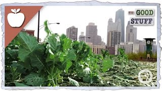 Why We Should Be Urban Farming