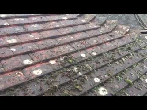 Roof Cleaning Peterborough