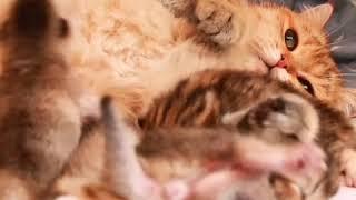 Кошка обнимает котят