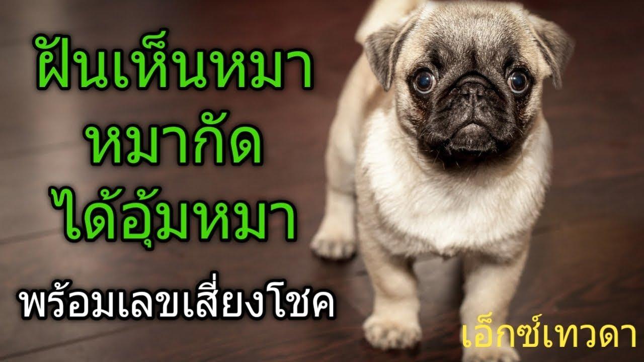 เอ็กซ์เทวดา#ฝันเห็นหมา#ฝันว่าหมากัดหรือฝันว่าได้อุ้มหมา