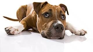 Собака съела носок капроновый, хлопковый! Что делать, если собака съела носок?