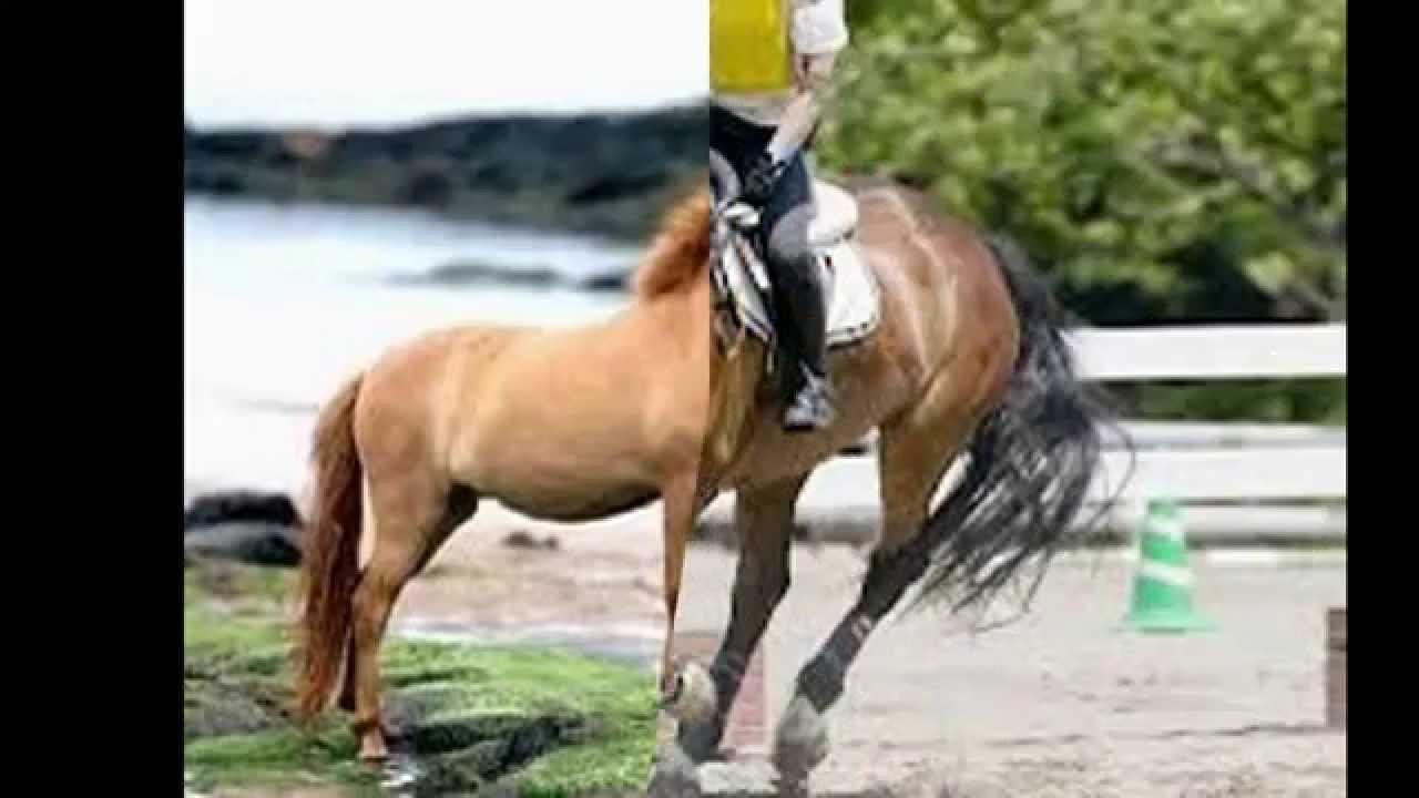 Immagini di cavalli d youtube for Immagini cavalli stilizzati
