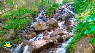 8 hours relaxing River Sounds - Sounds of Nature and Forests, Birdsong
