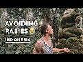 CRAZY MONKEY FOREST UBUD BALI - SACRED RABIES? | Indonesia Travel Vlog 139, 2018