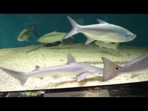 Skidaway Island Aquarium visual tour