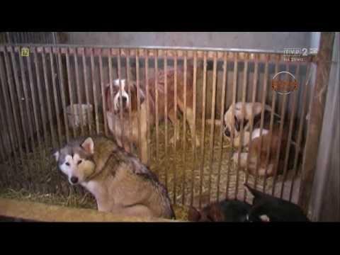 Hodowla psów i kotów rasowych: jak sprawdzić i wybrać hodowlę?