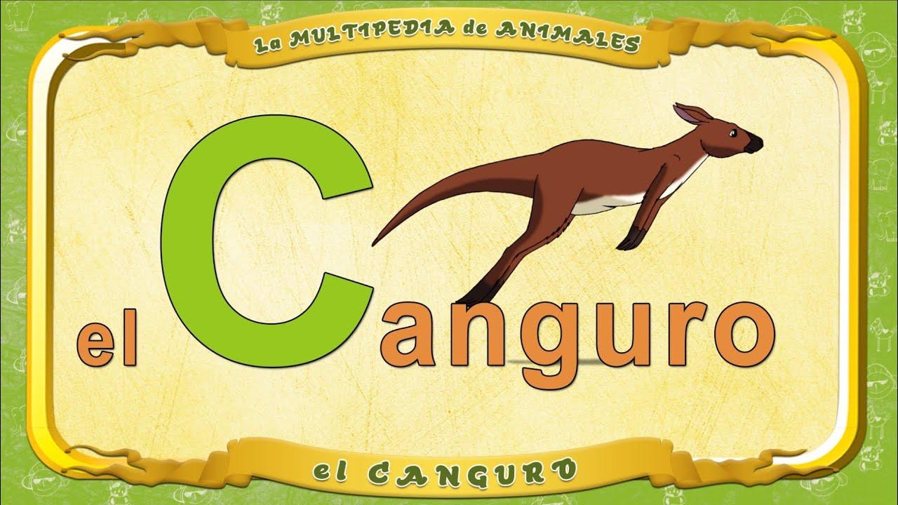 la Multipedia de animalesLetra C  el Canguro  YouTube