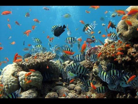 The Coral Sea: Emerald Isles in a Rainbow Sea